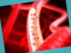здоровье сердечно сосудистой системы