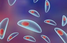 Методы лечения болезни токсоплазмоз