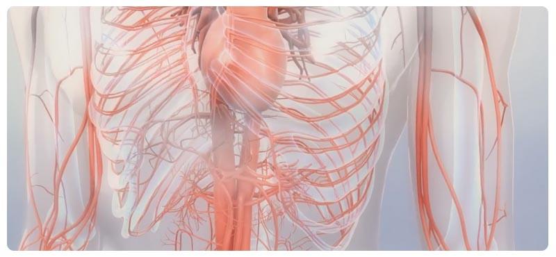 sosudistaya-hirurgiya1